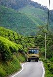 Straße zwischen Teeplantage in Malaysia Lizenzfreie Stockbilder