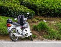 Straße zwischen Teeplantage in Malaysia Lizenzfreie Stockfotografie