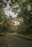 Straßenüberquerung der afrikanische Wald von Sao Tome Lizenzfreie Stockfotografie