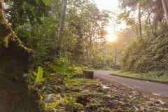 Straßenüberquerung der afrikanische Wald von Sao Tome Lizenzfreies Stockfoto