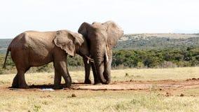 Straßen-Blog-wieder - Afrikaner-Bush-Elefant Lizenzfreie Stockfotografie