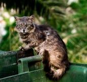 Straßen-Katze auf Behälter Stockfotos