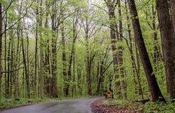 Straßen- und Pferdespuren durch Holz eines frisches Frühlinges stockfoto
