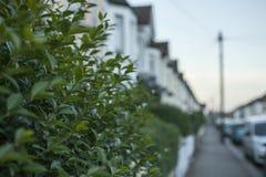 Straßen von London - die Hecke Stockfotos