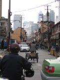 Straßen von Shanghai stockfotos