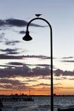 Straßenbeleuchtung mit Seemöwe und Sonnenuntergang an der Bucht lizenzfreie stockfotografie