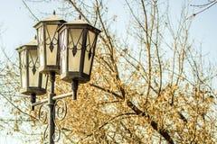 Straßenbeleuchtung vor dem hintergrund eines Baums im Frühjahr Stockfoto