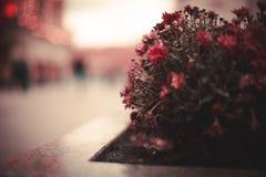 Straßenblumen Stockbild