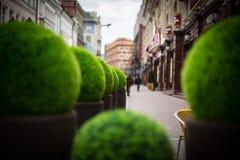 Straßenblumen neben Café Stockbild