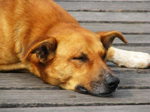Straßenhund 2 Lizenzfreie Stockfotografie