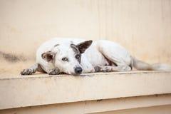 Straßenhund Stockfotografie
