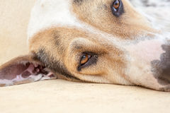 Straßenhund Stockfoto