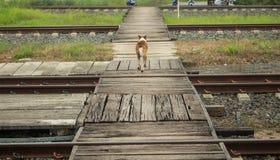 Straßenhund, der über Brücke an der Bahnstation läuft Stockfotos