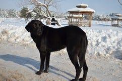 Straßenhund nahe Pavillon im schneebedeckten Park Lizenzfreie Stockfotografie