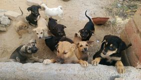 Straßenhunde Stockfotos