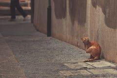 Straßeningwerkatze in Segovia stockbilder
