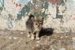 Straßenkatze auf den Straßen von Marrakesch und von Essaouira in Marokko im Fischereihafen und Medina nahe der Wand stockfotos