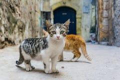 Straßenkatze auf den Straßen von Marrakesch und von Essaouira in Marokko im Fischereihafen und Medina nahe der Wand stockbild