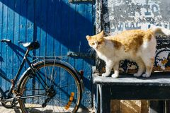 Straßenkatze auf den Straßen von Marrakesch und von Essaouira in Marokko im Fischereihafen und Medina nahe der Wand stockfotografie