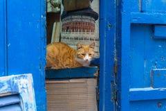 Straßenkatze auf den Straßen von Marrakesch und von Essaouira in Marokko im Fischereihafen und Medina nahe der Wand lizenzfreie stockfotos