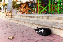 Straßenkatze, die auf der Pflasterung schläft Lizenzfreies Stockfoto