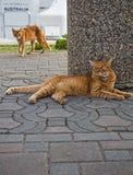 Straßenkatzen Lizenzfreie Stockbilder