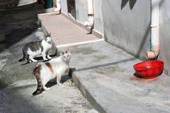 Straßenkatzen Stockbild