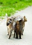 Straßenkatzen lizenzfreie stockfotografie