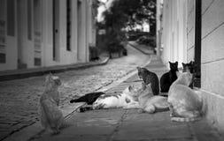 Straßenkatzen stockfoto