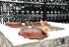Straßenkatzen in der Winterlandschaft Aalen Sie sich auf einer Heizung mit Luken stockfotografie