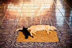 Straßenkatzen, die im buddhistischen Tempel im KOH Samui, Thailand schlafen Stockfotos