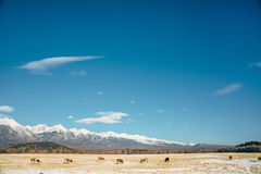 Straßenlandschaft mit Kuh stockfotos