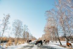 Straßenlandschaft mit Pferd stockfoto