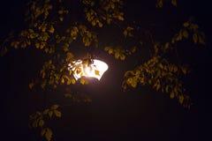Straßenlaterne glänzend von hinten belaubte Baumbrunchs nachts Stockfotografie