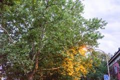 Straßenlaterne mit Baum am blauen Stundenabend lizenzfreie stockfotos