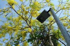 Straßenlaterne mit goldenem Duschblumen-Baum Lizenzfreies Stockbild
