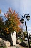 Straßenlaterne und gelber Baum Stockbilder