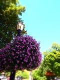 Straßenlaternenpfahl mit großen hängenden Körben von purpurroten Blumen lizenzfreies stockfoto