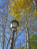 Straßenlaterneund -herbstbäume im Park Stockbild