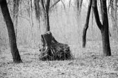 Straßenphotographie, Gegenstände, Beschaffenheiten, Landschaften lizenzfreie stockfotografie