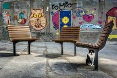 Straßenphotographie in Porto, Portugal Katze und Graffiti Stockbilder