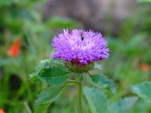 Straßenrand-Blumen Lizenzfreies Stockfoto