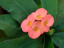 Straßenrand-Blumen Lizenzfreie Stockfotografie