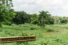 Straßenrand tropisches Scenary stockbilder
