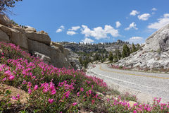 Straßenrandblumen in Yosemite-Hochland lizenzfreies stockfoto