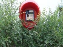 Straßentelefon in den Büschen Stockfoto