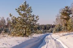 Straßenwaldschneewinter schneebedeckt Stockfotos