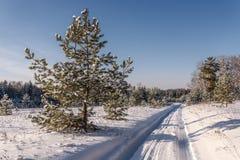 Straßenwaldschneewinter schneebedeckt Lizenzfreie Stockbilder
