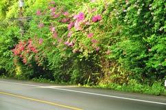 Straßenweißbaum stockfotos