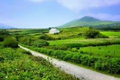 Straße durch grüne Felder der Grafschaft Kerry mit kleinem Gutshaus, Irland lizenzfreie stockfotos